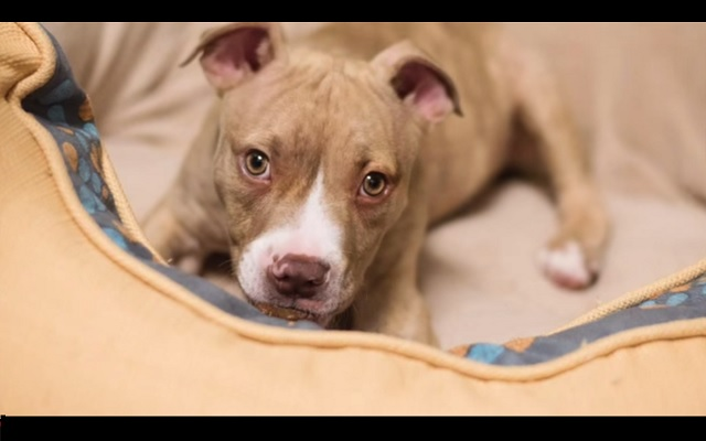 para puppy