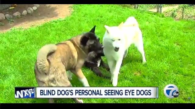 seeing eye dogs