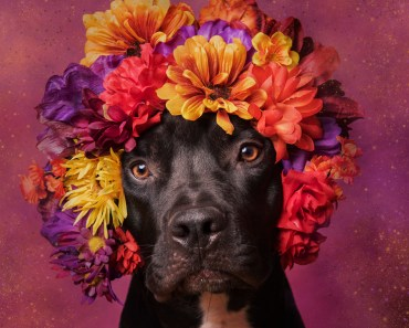 Photographer Uses Flower Arrangements To Help Abandoned Pit Bulls Find Homes