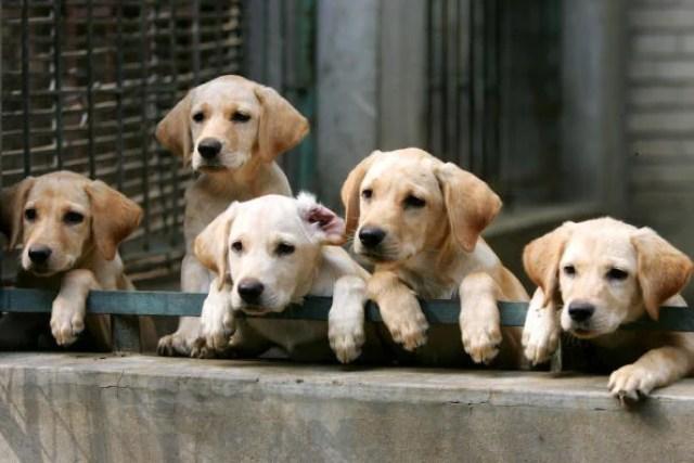 Hybrid Dog Breeds