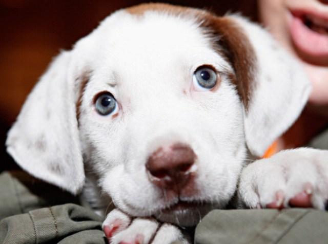 adorable puppy names