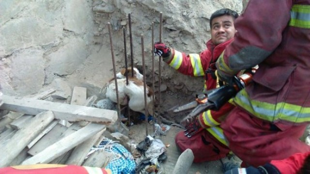 dog falls at construction site