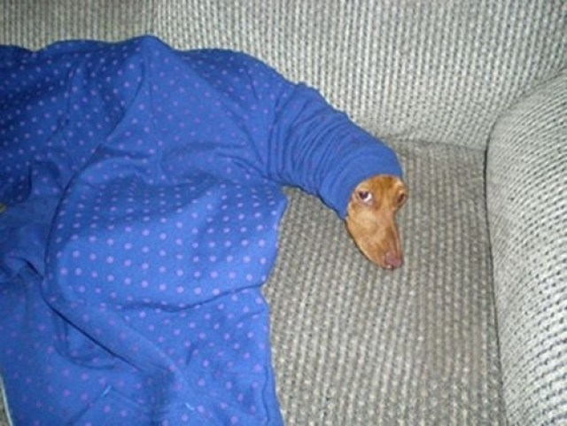 dog hiding from morning