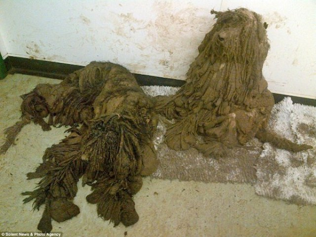 matted puppies
