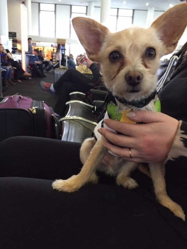winston at the airport
