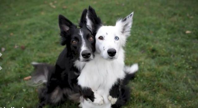 dogs posing