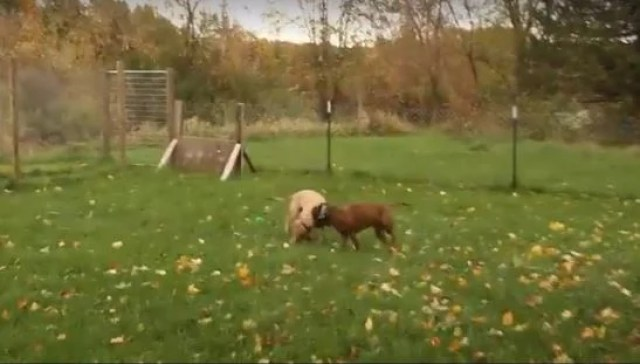 dogs meeting for first time