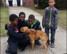 Four Little Boys Rescue Abandoned Pit Bull and Save Her Life