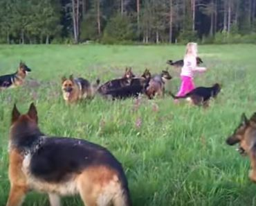 Little Girl of 5 Plays with 14 German Shepherds