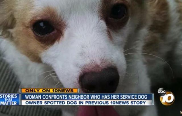 stolen dog