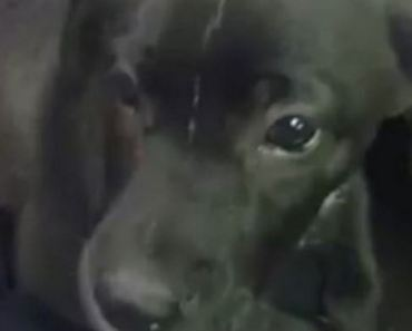 Woman Rescues Puppy Left in Trash Bag in the Middle of the Road