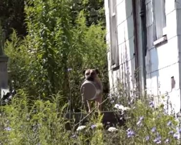 Video of Homeless Dog Carrying Around His Food Bowl Is Heartbreaking