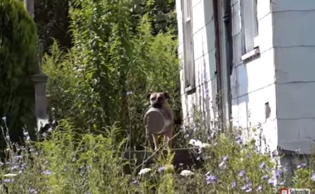 homeless dog