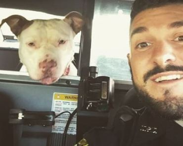 Police Officer Takes the Most Awesome Selfies with Lost Dogs