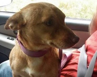 Woman Rescues Dog and Posts Scathing Letter to Those Who Abandoned Him