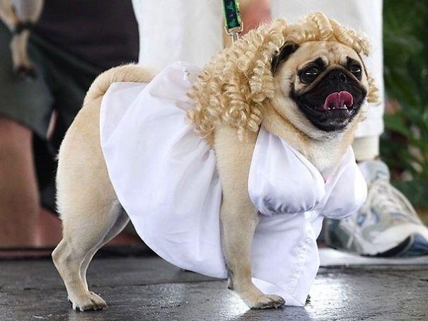 halloween-dog-costumes-11