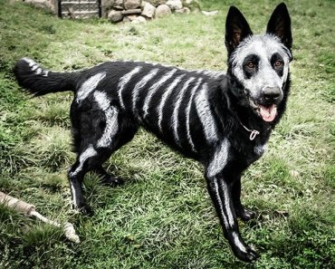10 Awesome Halloween Costume Ideas For Dogs