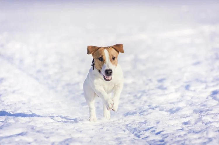 20 dog breeds perfect for cold weather