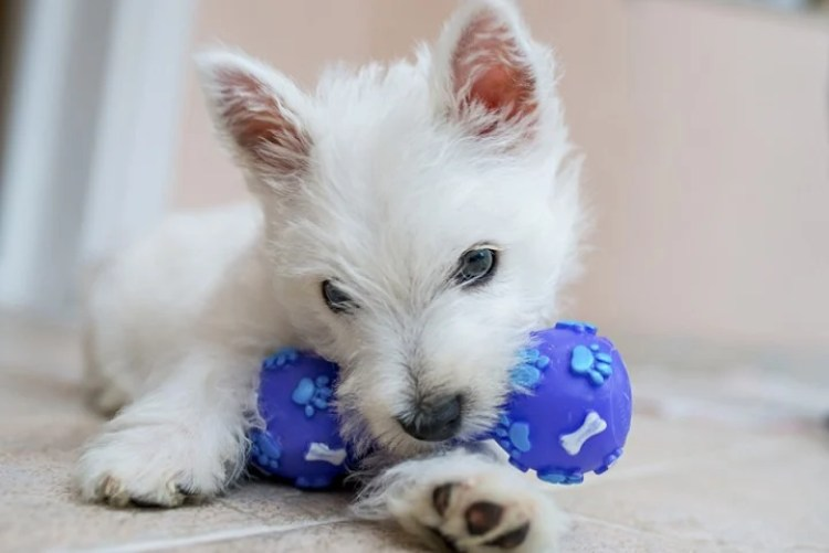 What are the best pet toys that you must have