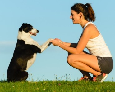 A Pet Owner's Personality Can Affect Canine Training Success