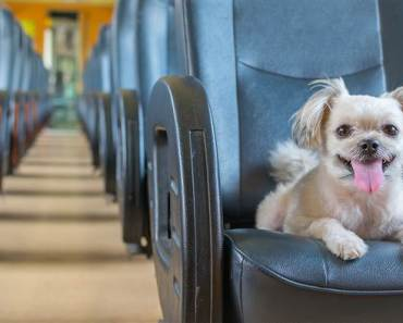 Five Excellent Dog Breeds for Traveling in 2019