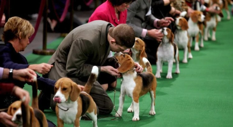 The Difference Between the AKC, CKC, and UKC Breed Registries