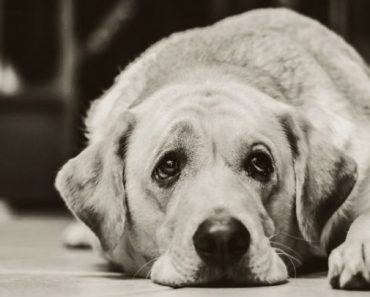 Are Grumpy Dogs More Intelligent Than Happy Dogs?