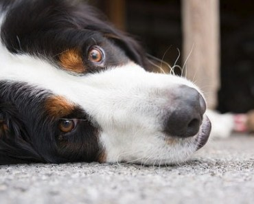 What to Do if You Hear Stomach Gurgling in Your Dog