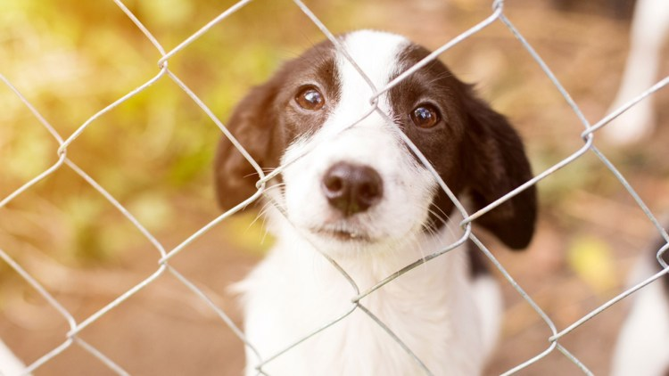 Here Are Some Possible Home Remedies For Kennel Cough