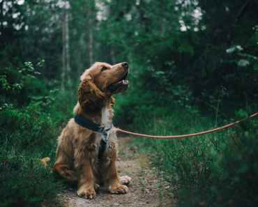 Best Natural Treats to Improve Your Dog's Health