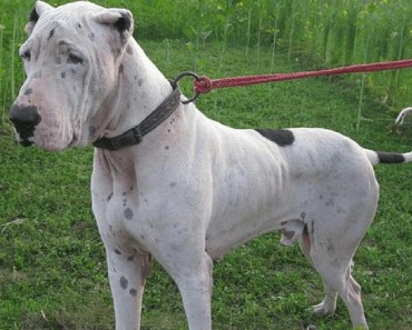 10 Things You Didn't Know about the Bully Kutta