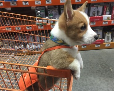 10 of the Biggest Retail Shops That Allow Dogs