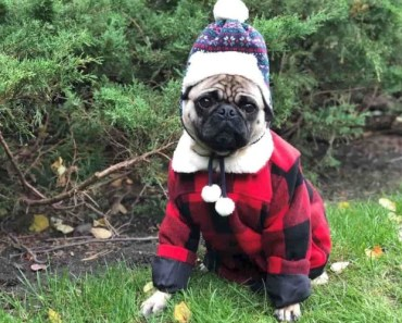 Five Must Have Winter Products for Your Dog