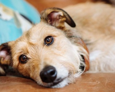 What is Endocarditis In Dogs?