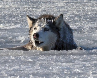 Why You Shouldn't Jump In Icy Waters To Save Your Dog