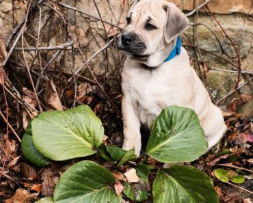 Protecting Your Pets from Poisons: What You Need to Know