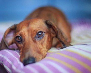 What You Should Know About Gastritis in Dogs