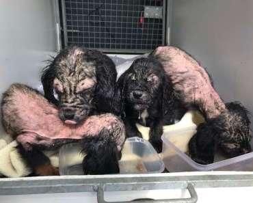 Bald Puppies