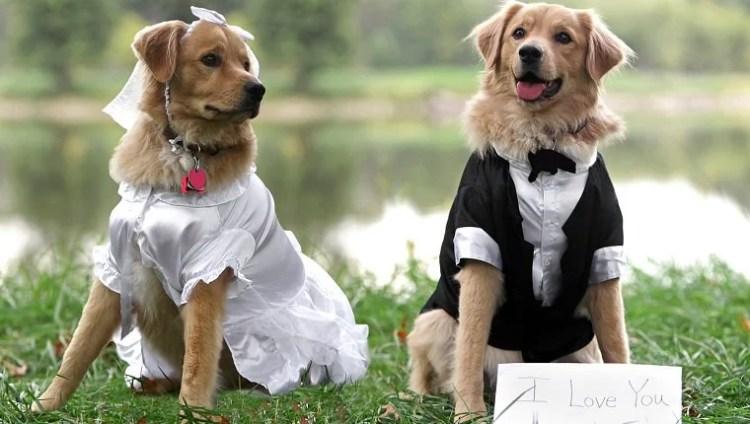 Dog Marriage