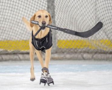 Benny The Skating Dog