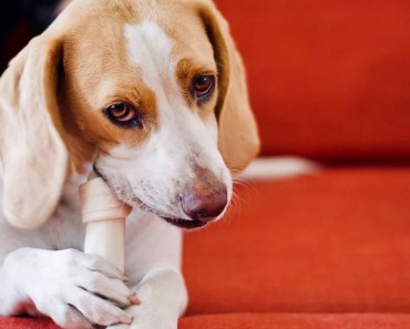 Five Dog Training Treats That Will Lead to Success