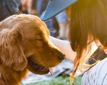 Tips to Have a Fun and Safe Picnic With Your Dog