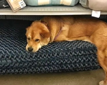The 10 Most Stubborn Dog Breeds