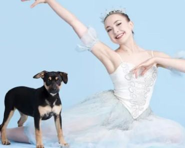 Shelter Dogs Learn Ballet to Find Forever Homes