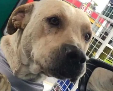 Stray Dog Adopted by Gas Station Becomes Hero During Scary Robbery