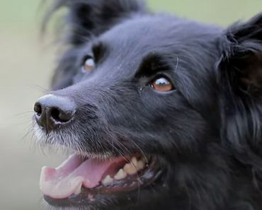 """Dogs Have Been Our """"Best Friends"""" for 23,000 Years, Study Says"""