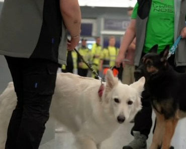 COVID Testing Proving Increasingly Accurate in Sniffing Dogs