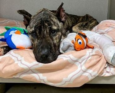 Dying Dog Dumped in Parking Lot Recovering at Kentucky Rescue