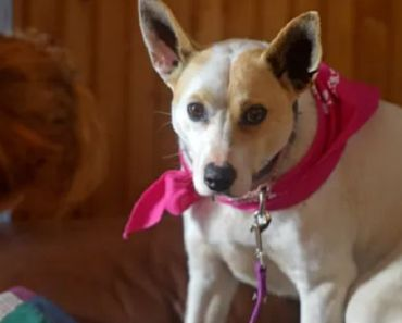 Missing Dog in Massachusetts Reunited with Owner After 5 Years Apart