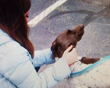 TV Reporter Recognizes Stolen Dog and Rescues it from Suspected Thief On Air